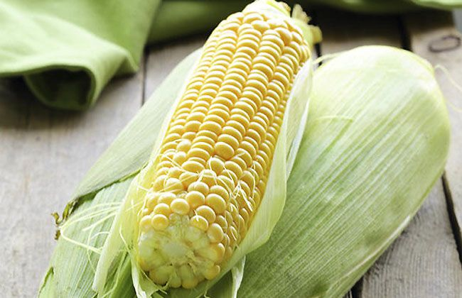 Is Corn Good to Eat on a Diet