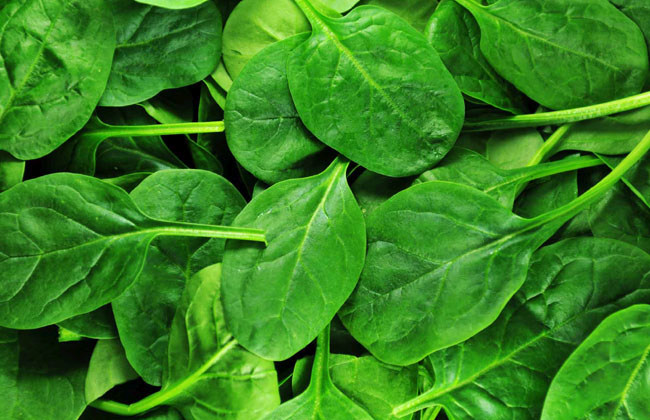 Is Spinach Good For Arthritis