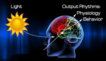 What does circadian rhythm mean